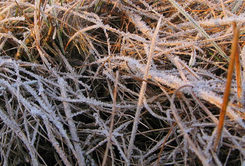 Frostigt gräs