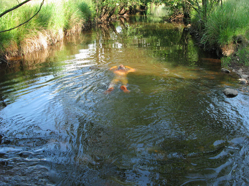 Började dagen med att lufsa en runda i skogen, tog ett dopp i Rösshöholmsån. (bilden från tidigare i somras