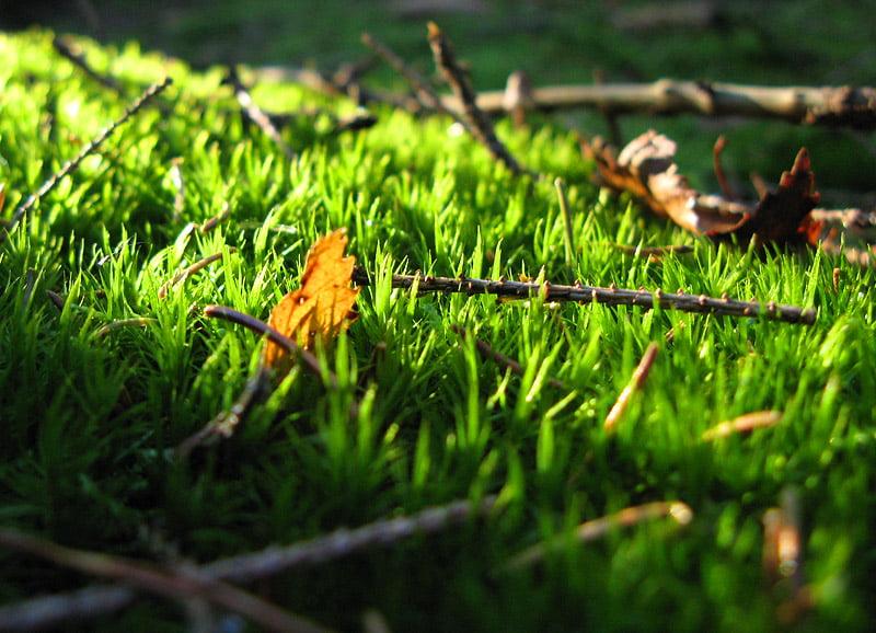 Löv i mossa