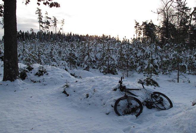 Mysigt med snö och fint lågt vinterljus