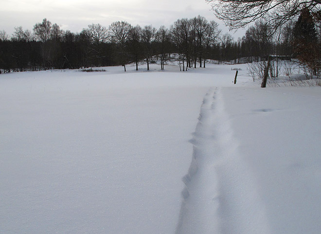 Kom några centimeter snö i natt igen, mysigt