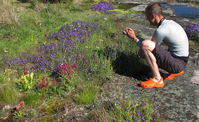 Växer en hel del blommor på Boskär bla orkidéen Adam och Eva
