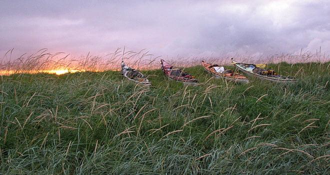 Det mesta gräset hålls nere med får, men inte allt :)