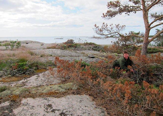Pia letar gömma på Klåvskärs östra sida