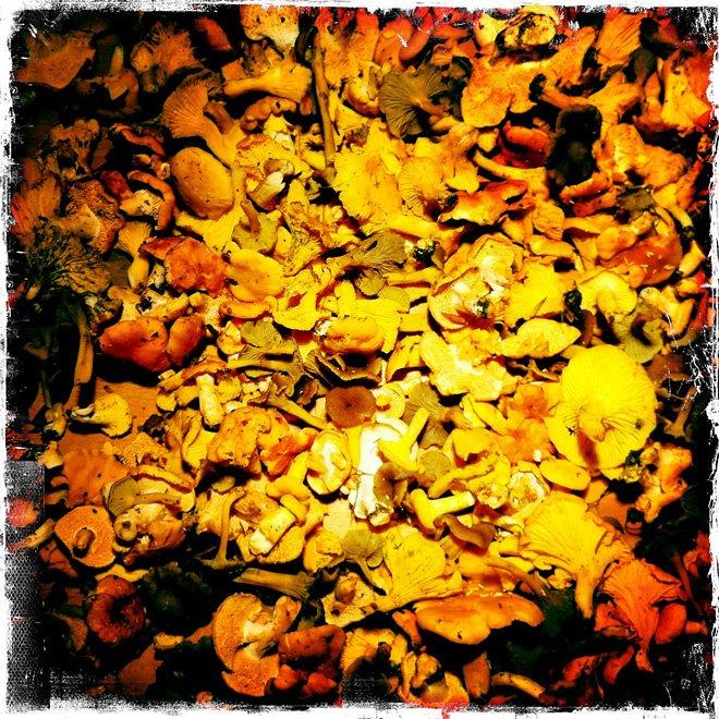 Mycker svamp nu