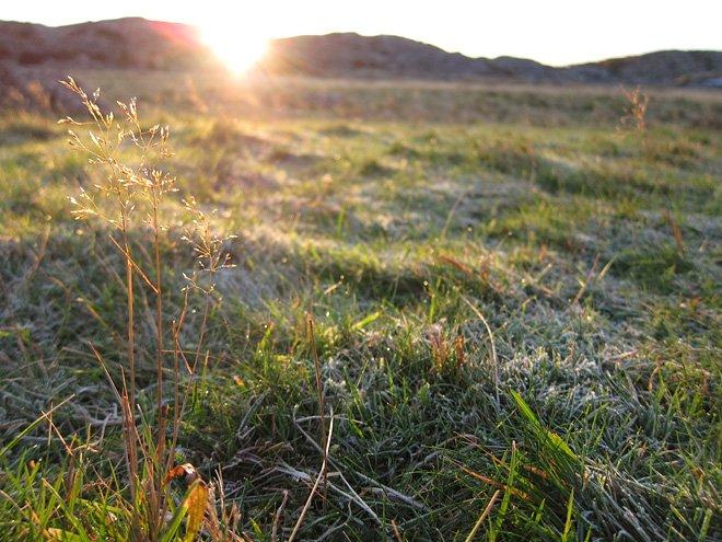 Solen börjar tina upp frosten