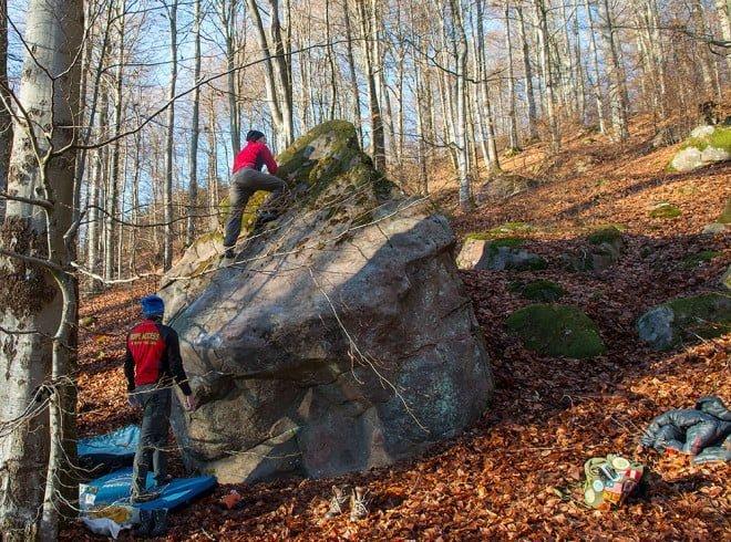 Stenen i skogen. Finfint på Hallandsåsens sydsluttning