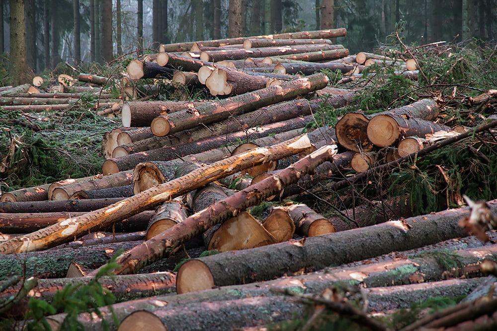 Avverkas i skogarna