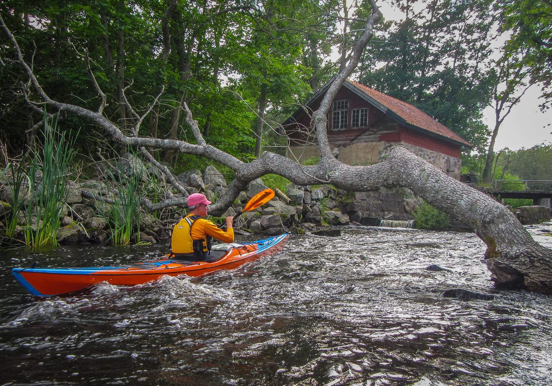 LIte sötvattenspaddling i Virboån. Till och med lite rörligt vatten