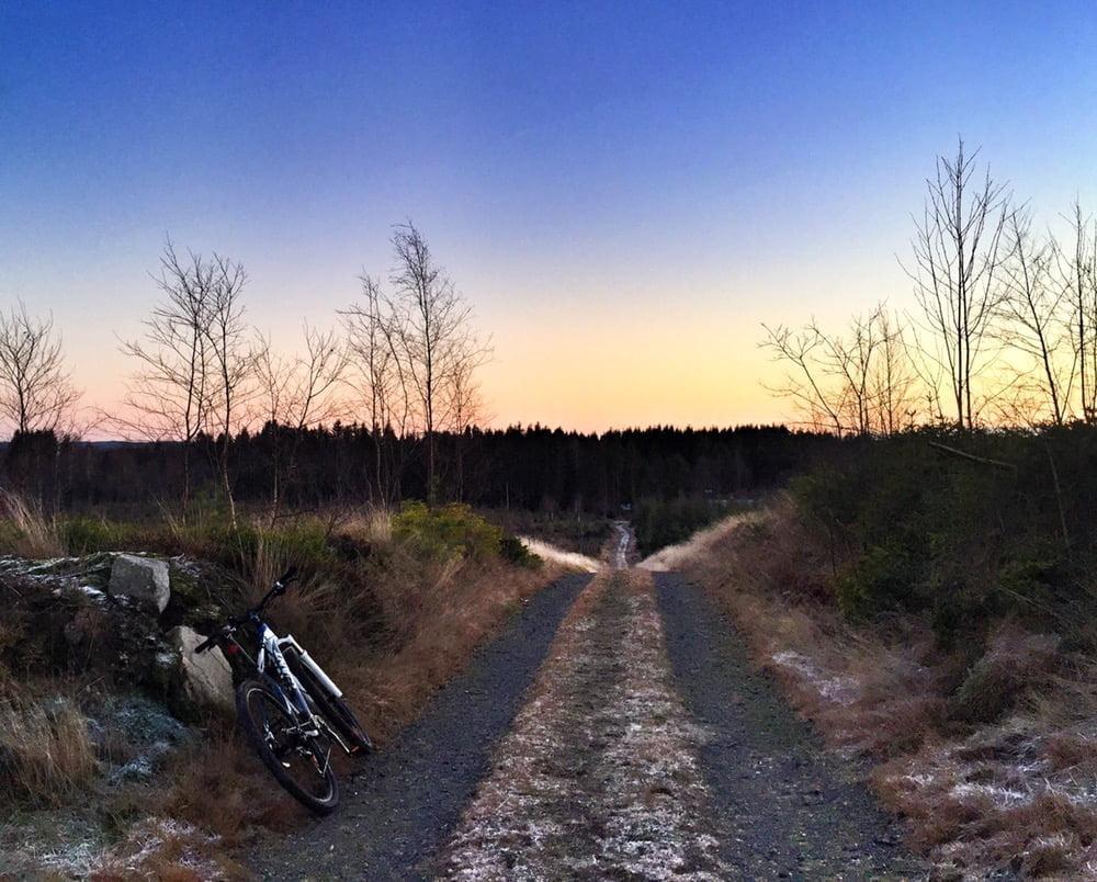 Jag tog en go cykelrunda på skogscykeln innan solen försvann helt för idag. Gött i gött ljus