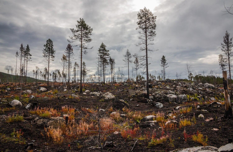 Skogsbrandsområde