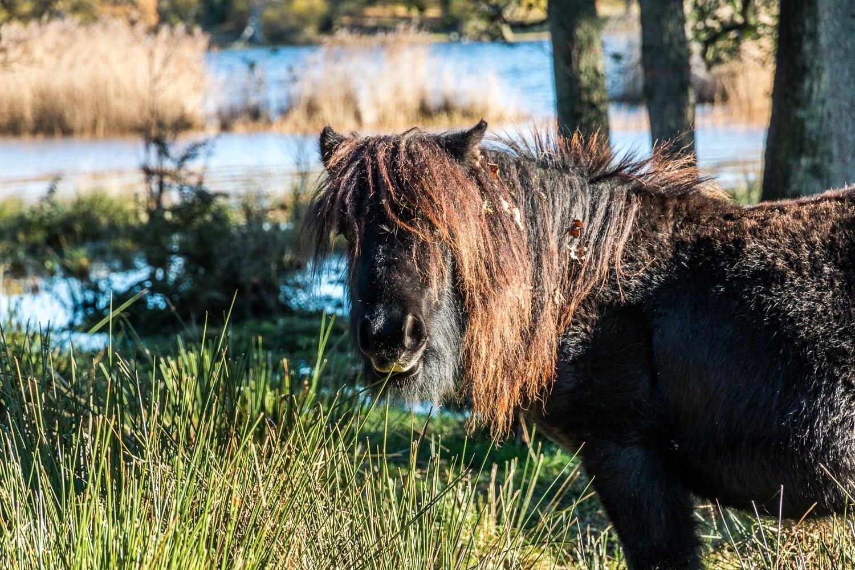 En av de gulliga hästarna