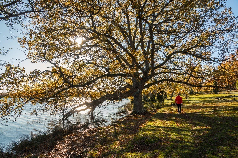 Stora motljusiga träd