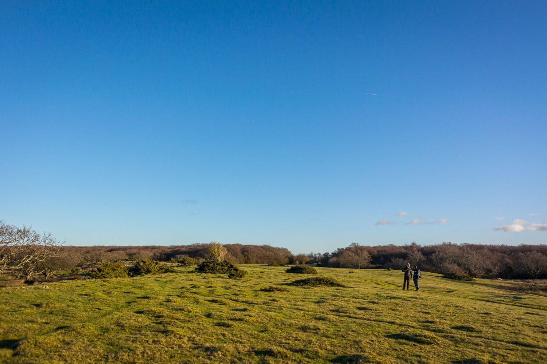 Öppet landskap, fint. Tydligen går över 200 får här under betessäsong