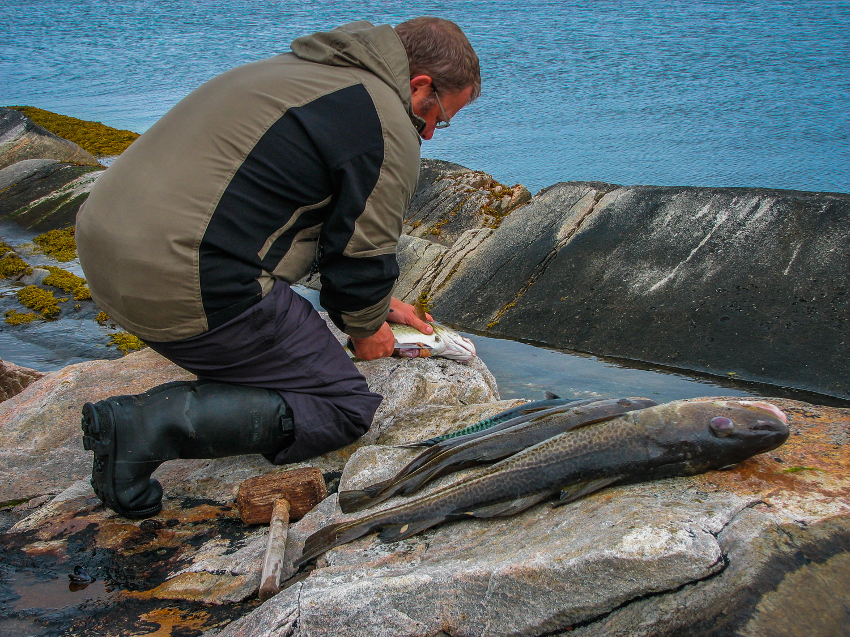 Rejäla fiskar som fångades