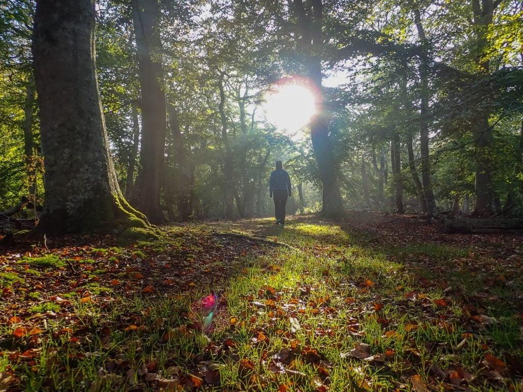 Skogen på Hallands väderö är magisk på många ställen